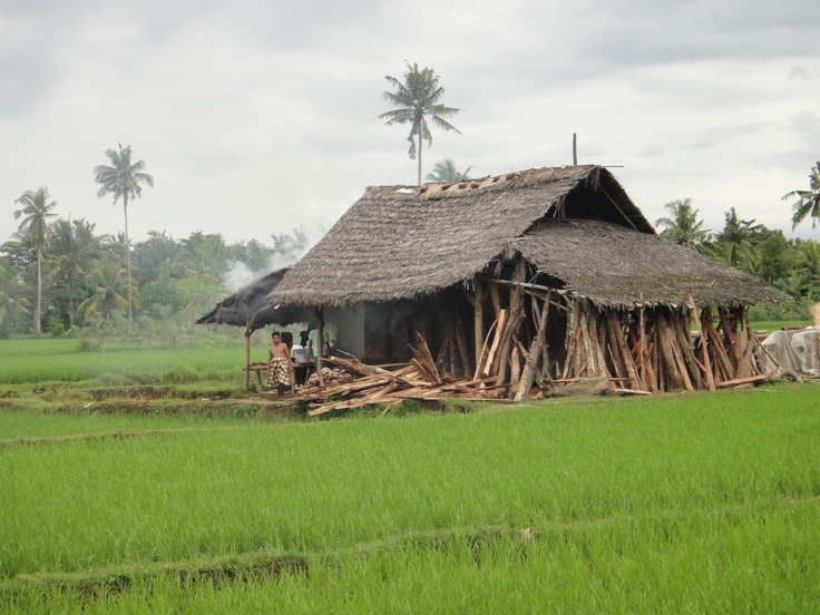 Small hut in the middle of green ricefield in Lombok