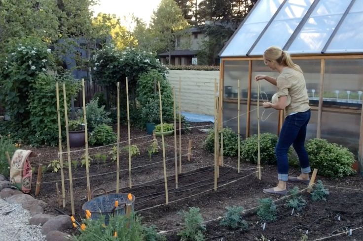 Sunset's Garden teamdemonstrates how to plant and stake dahlias for gorgeous summer color