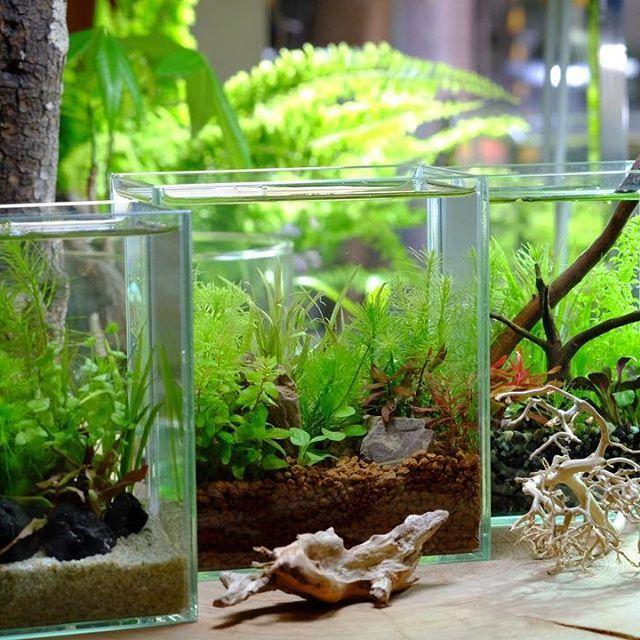 【aquashopwasabi】さんのInstagramをピンしています。 《🌿🌿The life with the aquatic plant🌿🌿 思い立ったらすぐに作れるアクアインテリア水槽🌲🌲 サッと作ってポンと置ける気軽さ👍👍 ネイチャーアクアリウム水槽のお隣りに🐟🐟 📝5月にワークショップ開催します❗️詳細はインスタグラムにて📝 #aquadesignamano#aquaticplants#aquashopwasabi#aquarium#natureaquarium#waterplants#plants#熱帯魚#moss#flowerarrangement#greeninterior#bonsai#インテリア#indoorplants#ada#aquaplants#botanical#aquascape#aquascaping #水草#水草水槽#ネイチャーアクアリウム#ボトルアクアリウム#観葉植物#金魚#アクアリウム#メダカ#interior#水槽#フラワーアレンジメント》