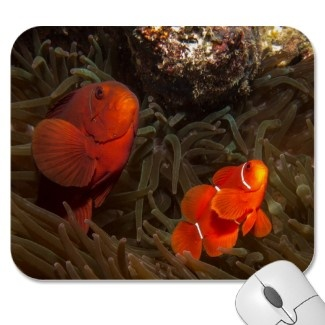 Appealing mousepad with pair of clownfish nestled in an anemone.