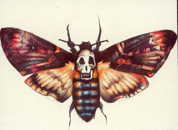 48 best Death's Head Hawk Moth images on Pinterest ...
