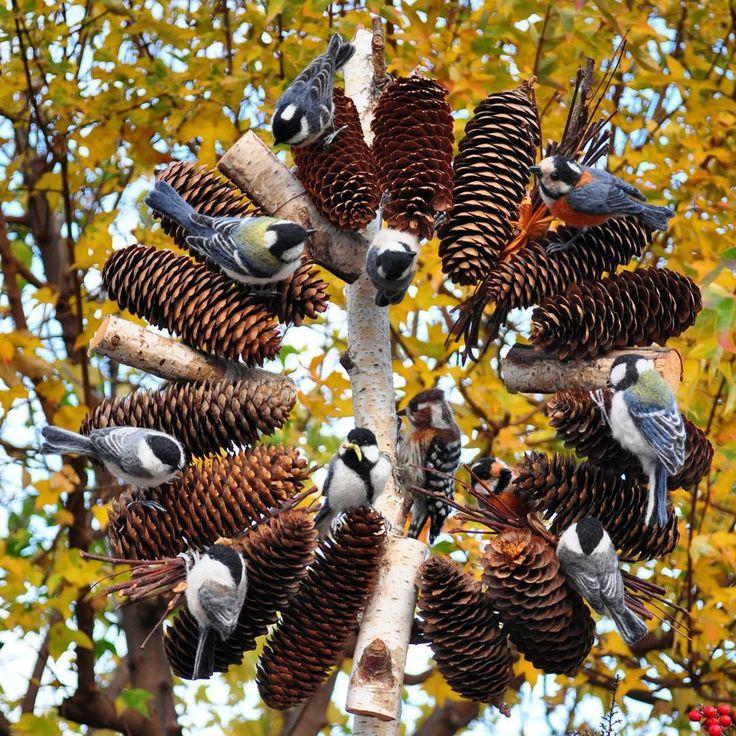 ドイツトウヒ(松ぼっくり)のリースに~~カラの混群~♪ Cones of Norway spruce .  The group of  small birds came over. * 冬になるとカラ類は混群を作るようになります。 どの鳥さんが誰か、名前わかるかな~(^w^) * #リース #ドイツトウヒ #松ボックリ #シラカバ#ハンドメイド #羊毛フェルト #羊毛フェルト鳥 #シジュウカラ#コガラ #ヤマガラ#ヒガラ#コゲラ#カラ類  #lease #wreath #norwayspruce #cones#handmade  #needlefelting#japanesetit #willowtit #variedtit #coaltit #pygmywoodpecker  #felting#felted#wildbirds ##birds