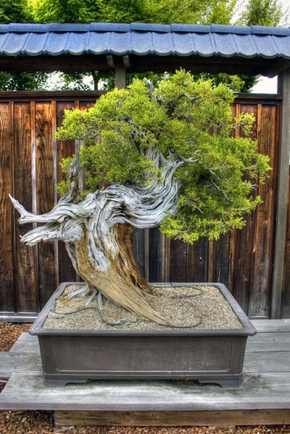 LAKE MERRITT'S BONSAI GARDEN  Bonsai garden in Oakland is curated by the first non-Japanese female bonsai master in the United States