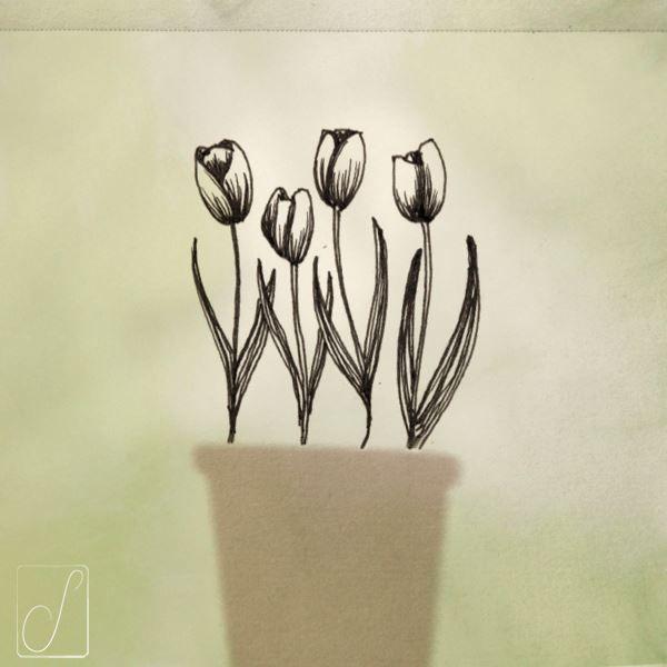 #unabellagiornata 289/365  #inktober2017 giorno 17  Tulipa - L'arte non poteva fingere una grazia più semplice né la natura formare una linea più bella. -James Montgomery-   #inktober  #inktoberaduntratto #erbologiababbana #erbarium #sketchbook #shadow #tulip