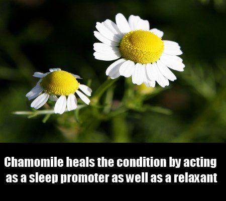 8 Herbal Remedies for Sleep Apnea   http://www.searchhomeremedy.com/herbal-remedies-for-sleep-apnea/