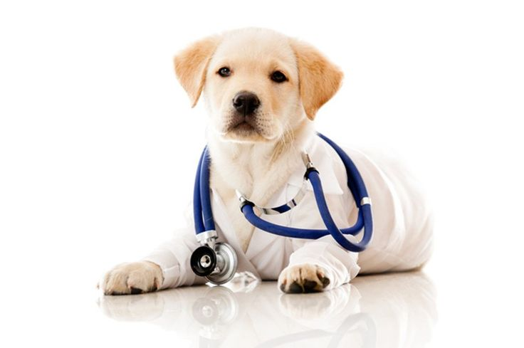 How to get the most our of your vet