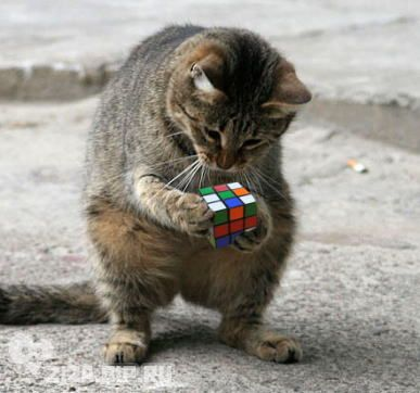 #Funny cat trying to solve a Rubik's cube.
