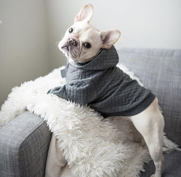 Pipolli dog quilted hoodie
