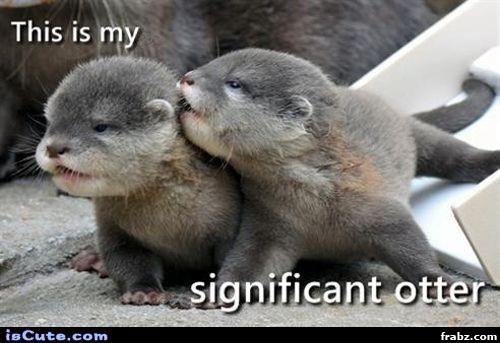 Significant Otter Meme Generator - Captionator Caption Generator - Frabz