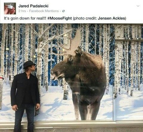 "But, you guys don't understand. He freaking saw the moose and was all like, ""Hey, Jensen. Take a picture of me facing off with the moose so we can post it on Twitter."""