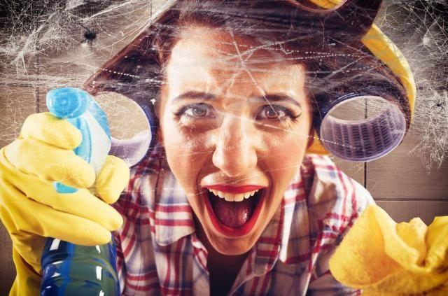 Jak pozbyć się z domu uciążliwych pająków? Poznaj kilka skutecznych sposobów #sprzątanie #porządki #pajęczyny