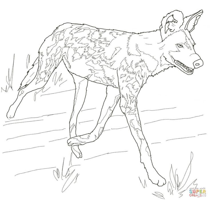 56 best china week images on pinterest asia chinese new for African wild dog coloring pages