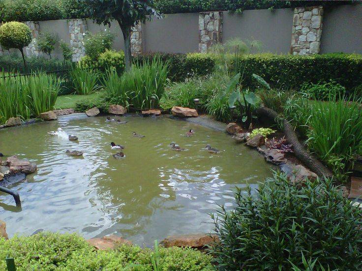 Pictures Of Backyard Duck Ponds : Duck pond, Ponds and Ducks on Pinterest