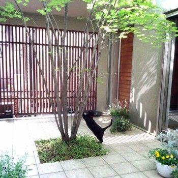 周りが囲ってある中庭だからこそできること。いつもお家にこもっているペットもたまにはお外で気分転換。