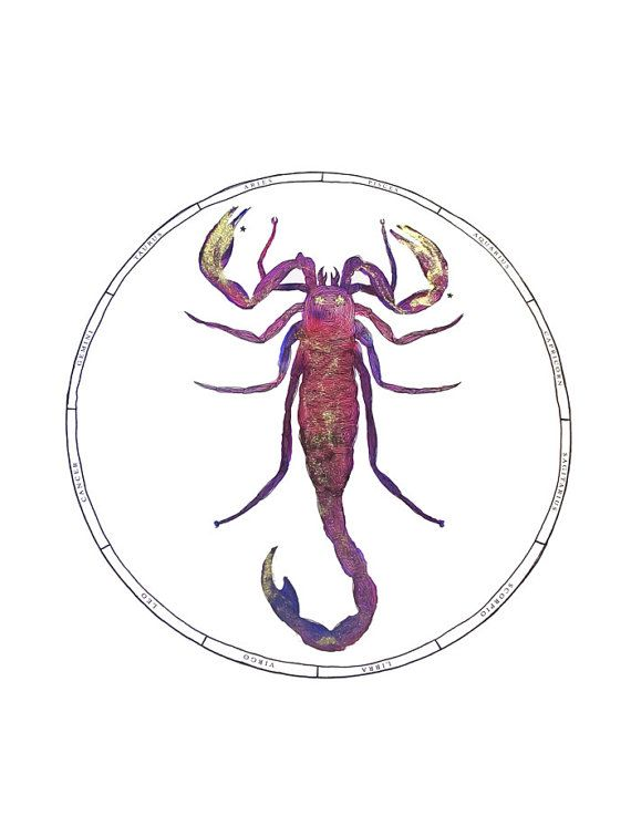 Scorpio Zodiac Illustration Print with Gold by AdriannesDesigns