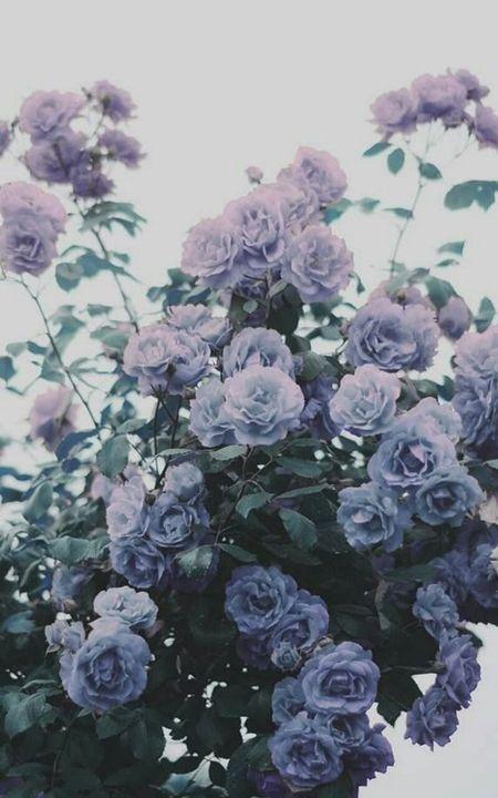 21 Pastel Blue Bedroom Designs Decorating Ideas: Tumblr Wallpaper - 21-26=Çiçek In 2019