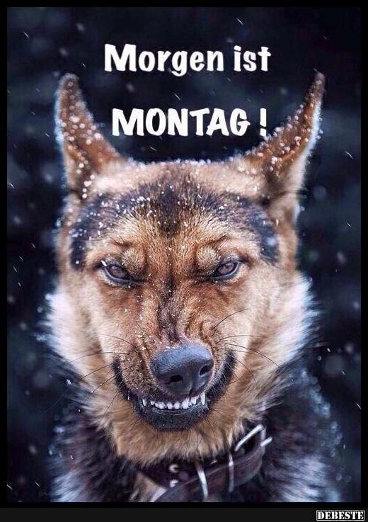Besten Bilder, Videos und Sprüche und es kommen täglich neue lustige Facebook Bilder auf DEBESTE.DE. Hier werden täglich Witze und Sprüche gepostet!