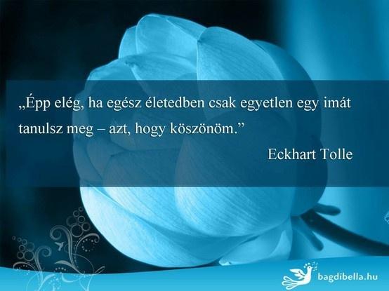 Épp elég, ha életedben csak egyetlen egy imát tanulsz meg - azt, hogy köszönöm. (Eckhart Tolle) - A kép forrása: bagdibella.hu