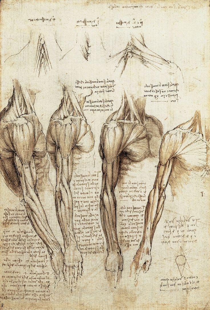 a study of the renaissance Italian renaissance artists became anatomists by necessity, as they attempted to  refine  studies for the libyan sibyl (recto) studies for the libyan sibyl and a.