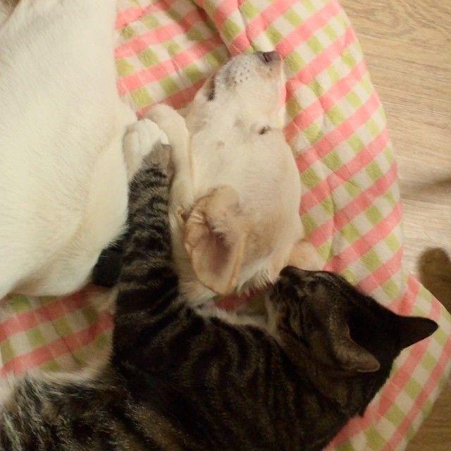 🎎 . #cat#dog