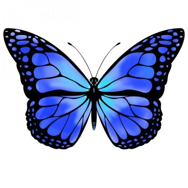 Butterfly Discover Blue Butterfly By Vicksterxp Blue Monarch Butterfly Blue Butterfly By Vicksterxp How Bout Fjarilstatueringar Djurmalning Handtatueringar