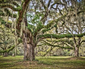 17 Best Images About Golden Isles On Pinterest