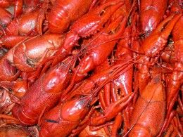 How to Cook Crawfish / crawdads