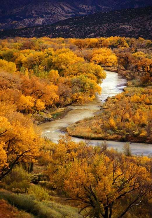 Chama River, New Mexico, fall color