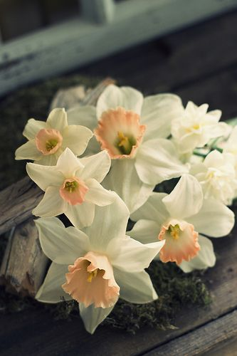 I would love to get Narcissus flower tattoos, since it's December's flower and I was born in December...they are really beautiful.