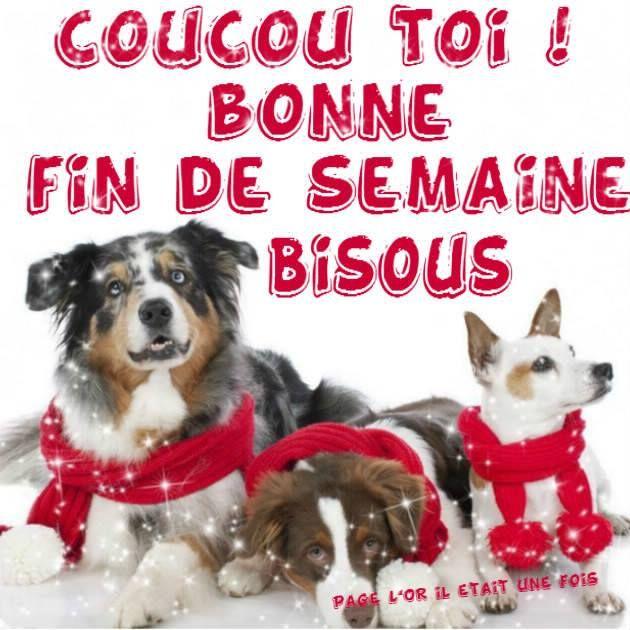 Coucou Toi ! Bonne Fin de Semaine Bisous #bonweekend chiens echarpe hiver noel bisous