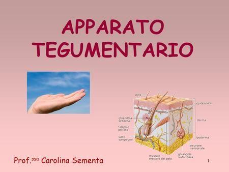 APPARATO TEGUMENTARIO 1 Prof. ssa Carolina Sementa.