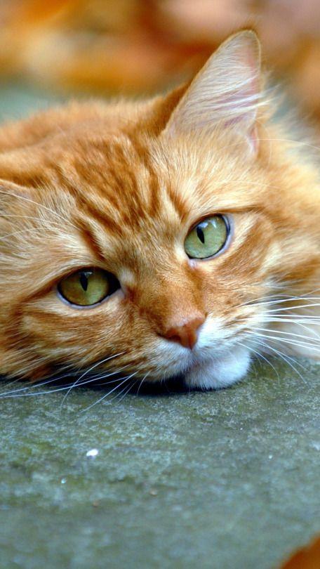 Furryfuzz.male. fluffy orange handsome.no mates or kits.no crush.kind.loves to swim.