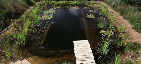 How to Build a DIY Natural Swimming Pool (Video)