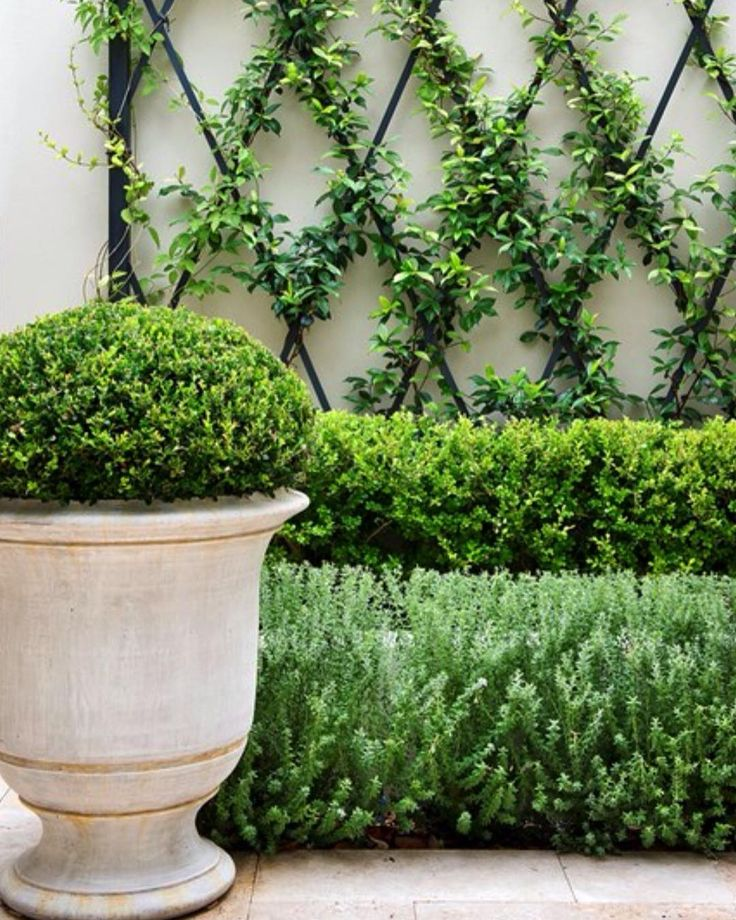 KEEP IT SIMPLE IN A COMPACT GARDEN I think this garden with stylish and simple planting is very elegant. With a narrow space, having star jasmine climb a metal trellis is a quick and effective way to soften a wall, and the layered hedges of boxwood and westringia with the slight change in colour and texture create a feeling of depth in a compact space. The white washed anduze pot with a clipped boxwood sphere is the icing on the cake housebeautiful.com.au #smallgarden #urbangarden…