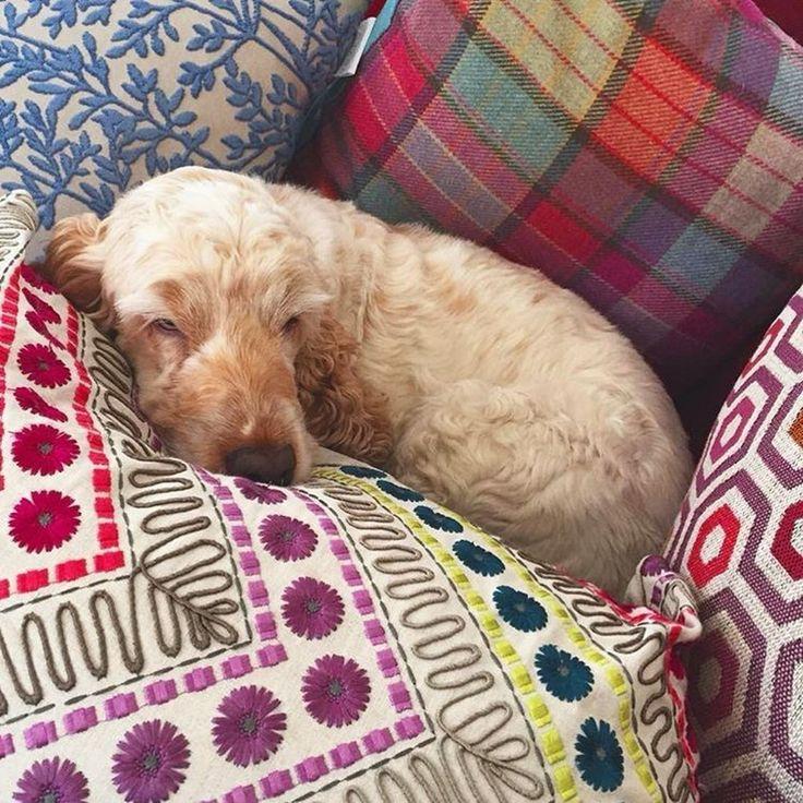 на подушках @voyage_deco так сладко спится! Волшебных снов! #galleria_arben #voyagemaison #собака #sleepyhead #dog