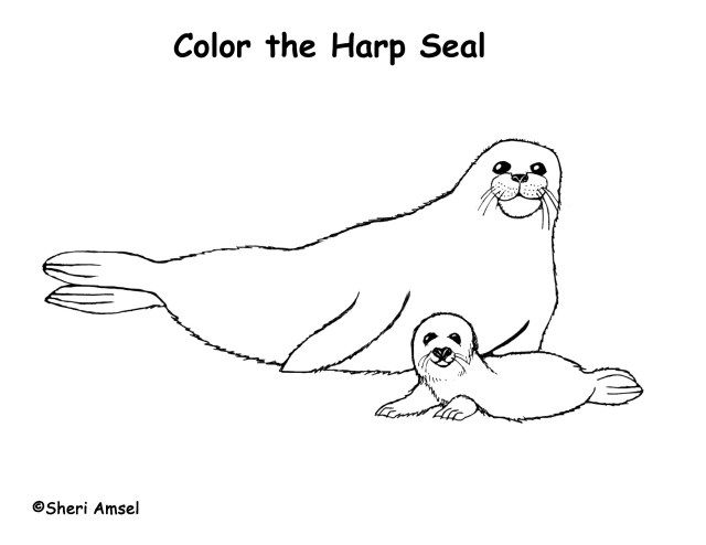 Exclusive Picture Of Seal Coloring Pages Albanysinsanity Com Animal Coloring Pages Baby Coloring Pages Coloring Pages For Kids