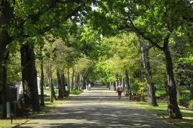 cape town gardens - Google Search