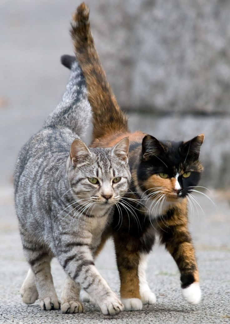 ALLEY CAT ALLIES PARTNERS WITH HUMANE ALLIANCE TO TRAIN ...