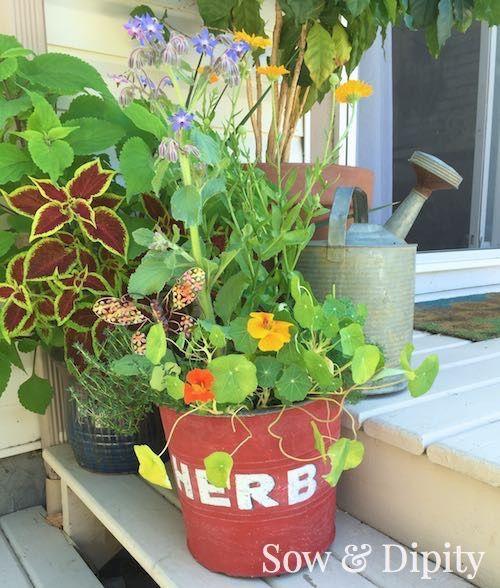 Grow an edible flower planter