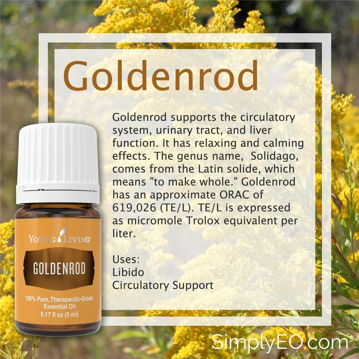 Goldenrod 5ml Essential Oil Young Living