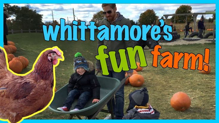 Fun at Whittamore's Farm with Wagon Ride and Pumpkin Picking | Piccolo B...