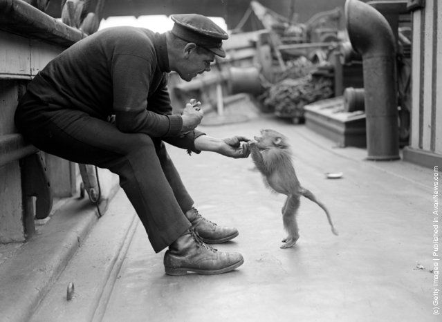 Sailor and baby baboon aboard the Friendship, June 3, 1929.