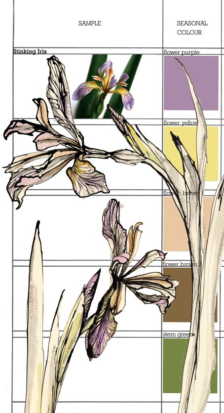 Planet Sam: Colour from the season - Stinking Iris purple
