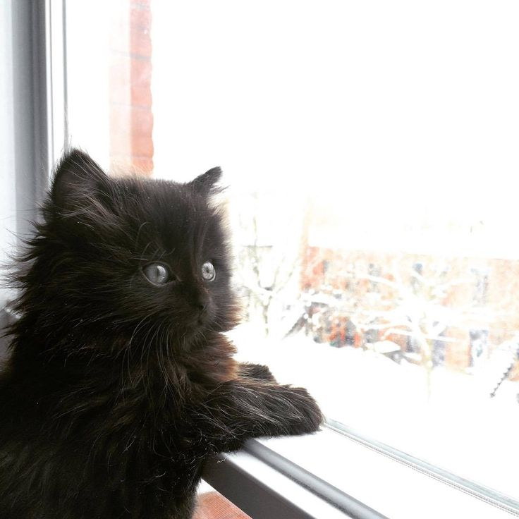 Our little foster floof checking out the Montreal snow today