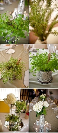 potted herbs as centerpieces for shower?