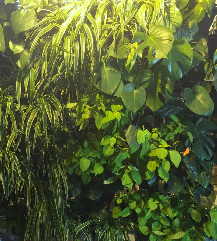 Atmosphy Green Wall www.atmosphy.com #greenwall #plants #verticalgarden