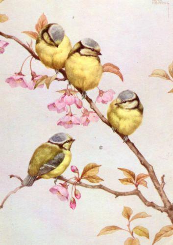 """Bluetits on Cherry Blossom"" A s Noel Hopking PC Medici PC 1429 Stunning Look | eBay"