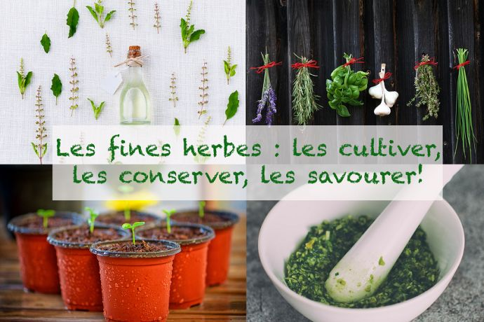 fines-herbes-couverture