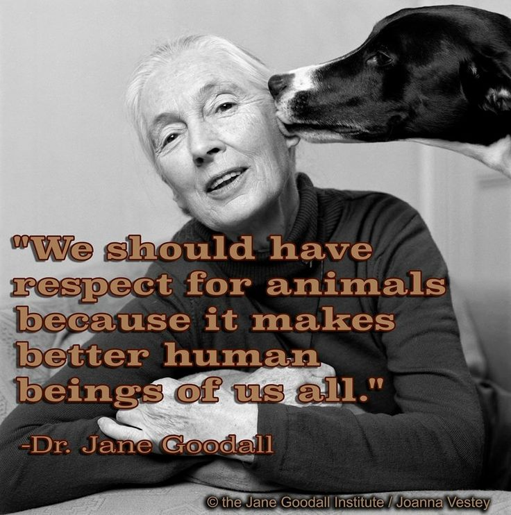 Jane Goodall Quotes: 476 Best Images About JANE GOODALL!! On Pinterest