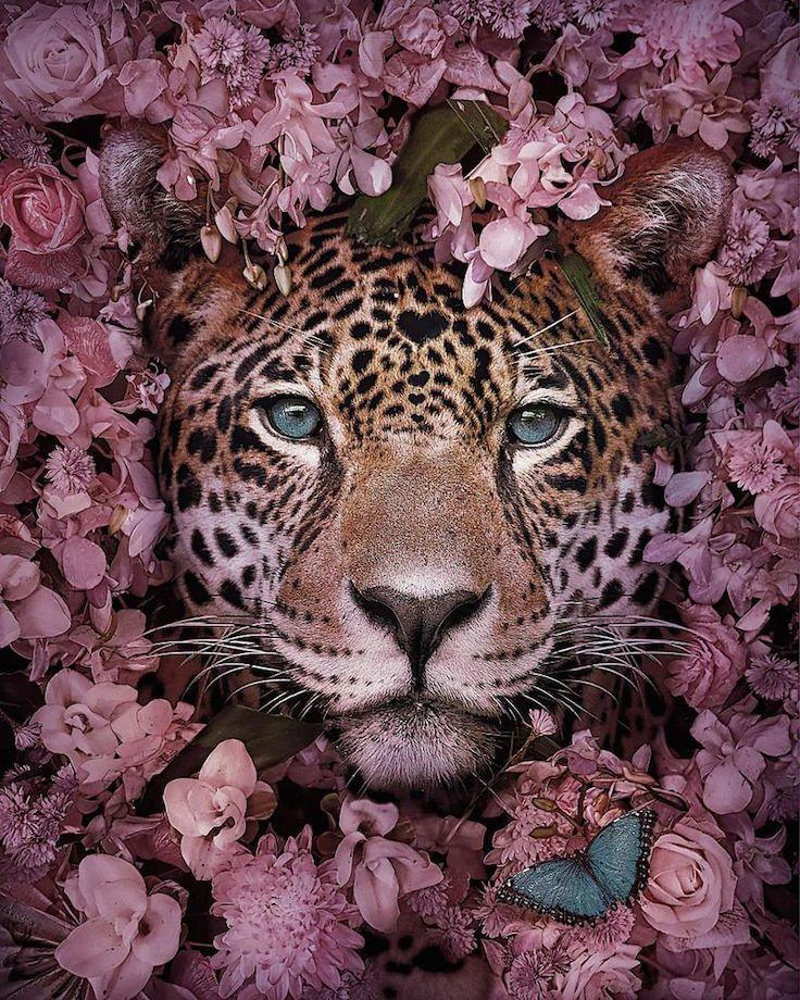 Cet artiste réalise de sublimes pictures d'animaux en hazard d'extinction pour nous sensibiliser à leur type